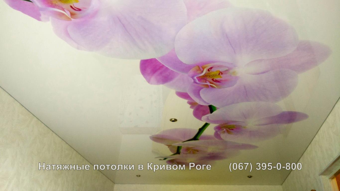 potolki_photopechat-29